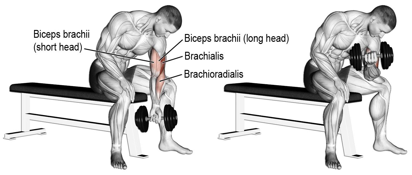 bicepsui