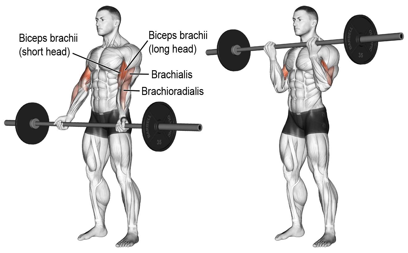 pratimai bicepsui