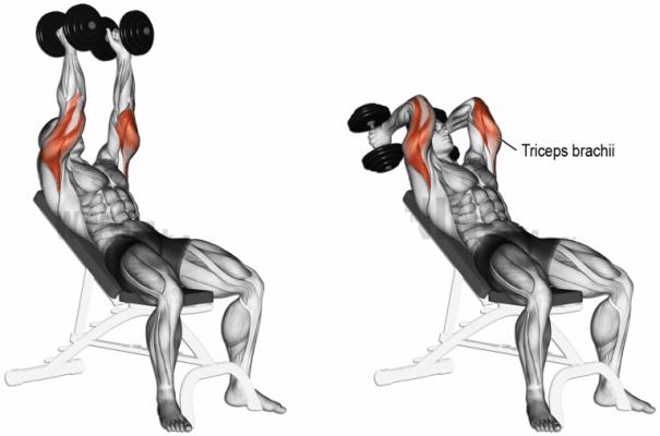 pratimai rankoms bicepsui tricepsui